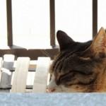昼夜逆転や朝起きられないのは概日リズム睡眠障害が原因か