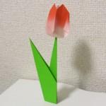 折り紙 チューリップの花と葉とつぼみの折り方【立体・春の花】